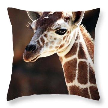 Baby Giraffe Throw Pillow by John Rizzuto
