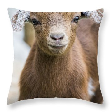 Baby Goat Throw Pillow by Shelby  Young