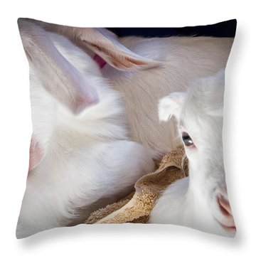 Baby Goats Napping Throw Pillow