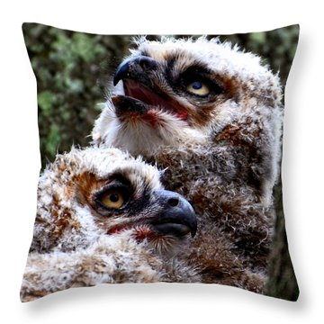 Throw Pillow featuring the photograph Baby Great Horned Owl Twins by AnnaJo Vahle