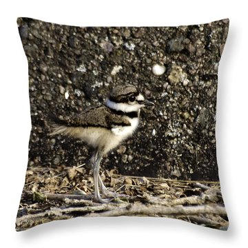 Baby Killdeer 1 Throw Pillow by Thomas Young