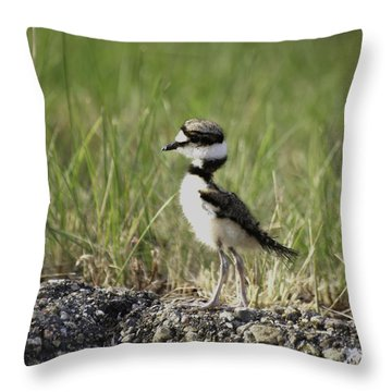Baby Killdeer 2 Throw Pillow by Thomas Young