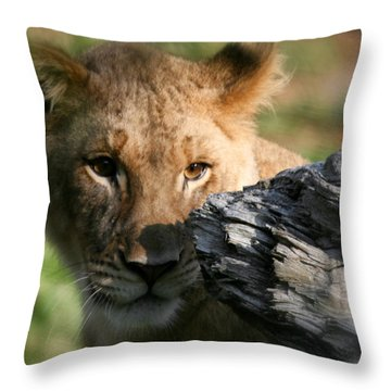 Baby Lion Throw Pillow