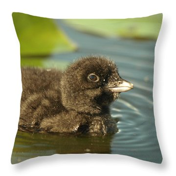 Throw Pillow featuring the photograph Baby Loon by James Peterson