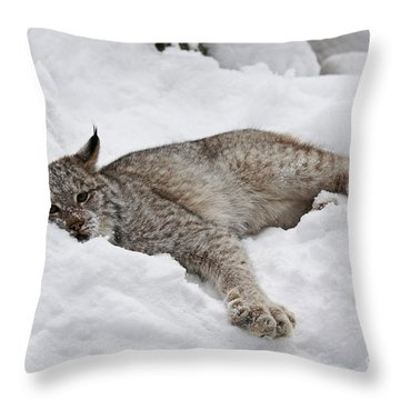 Baby Lynx Watching You Throw Pillow by Inspired Nature Photography Fine Art Photography