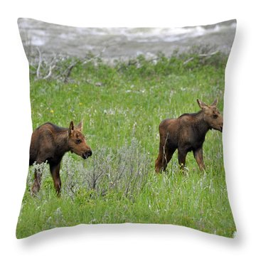 Baby Moose On The Banks Of The Gallatin Throw Pillow