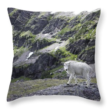 Baby Mountain Goat At Comeau Pass Throw Pillow