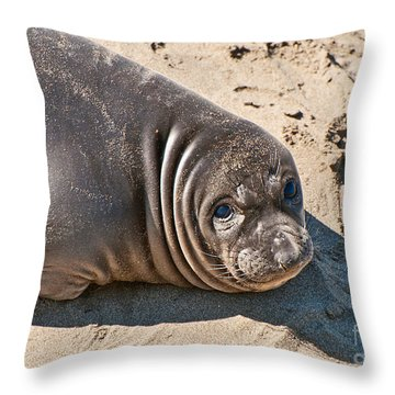 Baby Northern Elephant Seals Mirounga Angustirostris At The Piedras Blancas Beach Throw Pillow by Jamie Pham