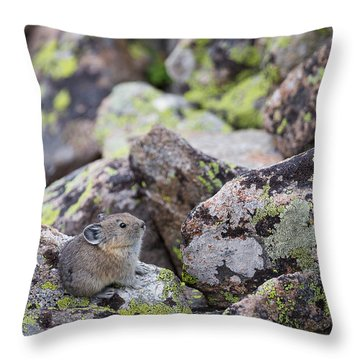 Baby Pika Throw Pillow