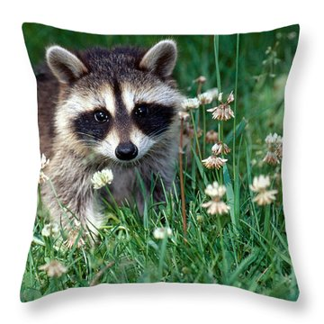 Baby Raccoon Throw Pillow