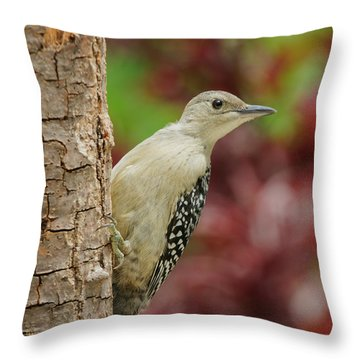 Baby Red Bellied Woodpecker Throw Pillow by Lara Ellis