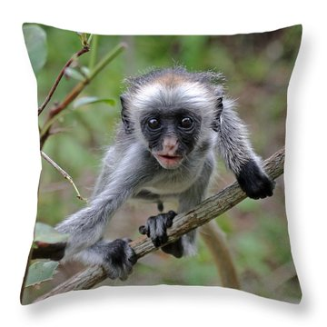 Baby Red Colobus Monkey Throw Pillow
