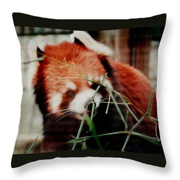 Baby Red Panda Bear Throw Pillow by Belinda Lee
