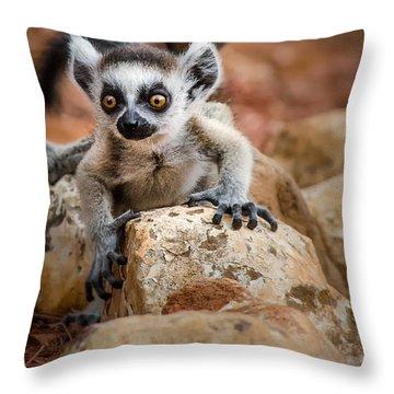 Baby Ringtail Lemur Throw Pillow