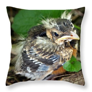 Throw Pillow featuring the photograph Baby Robin Among The Hosta's 2 by Deborah Fay