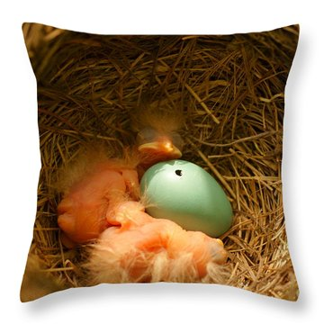 Baby Robins2 Throw Pillow