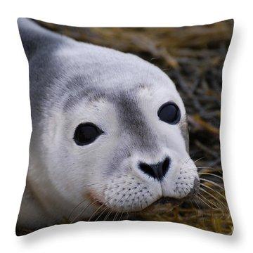 Baby Seal Throw Pillow by DejaVu Designs