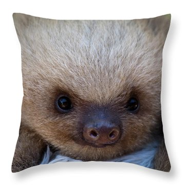 Baby Sloth Throw Pillow by Heiko Koehrer-Wagner