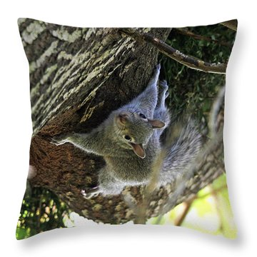 Throw Pillow featuring the photograph Baby Squirrel On The Loose by Trina  Ansel