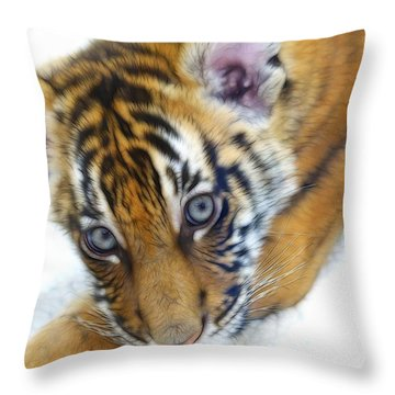 Baby Tiger Throw Pillow by Steve McKinzie