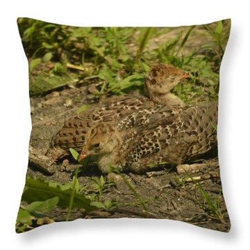 Baby Turkeys Throw Pillow