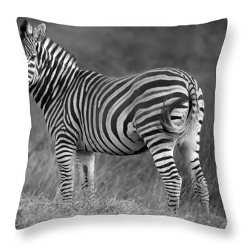 Baby Zebra Throw Pillow