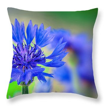 Bachelor's Button Throw Pillow