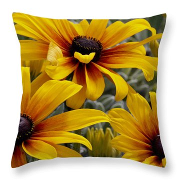 Throw Pillow featuring the photograph Back-eyed-susan by Ivete Basso Photography