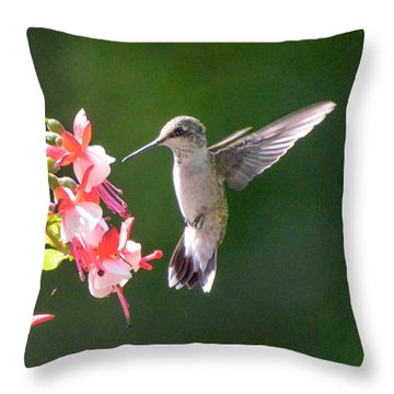 Backlit Fuchsia And Hummer Throw Pillow