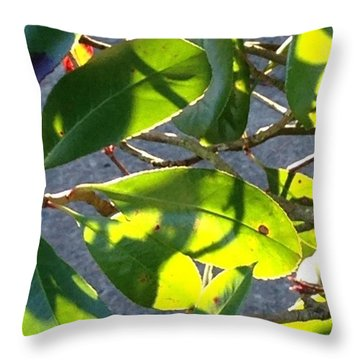 Backlit Leaves, Afternoon Light, Late Throw Pillow