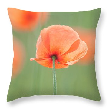 Backlit Poppies Throw Pillow