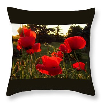Backlit Red Poppies Throw Pillow by Mary Wolf
