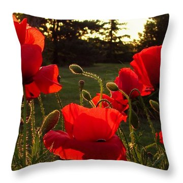 Backlit Red Poppies Throw Pillow