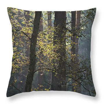 Backlit Trees Throw Pillow