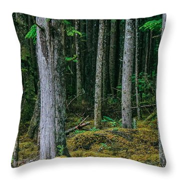 Inside View Backroad Forest Throw Pillow