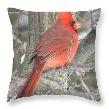 Backyard Beau Throw Pillow