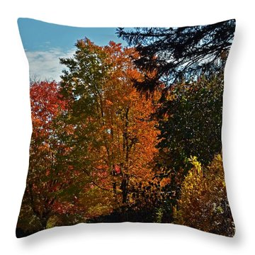 Backyard Beauty Throw Pillow by Judy Wolinsky