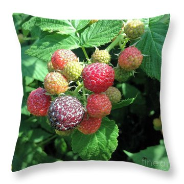 Throw Pillow featuring the photograph Fruit- Black Raspberries - Luther Fine Art by Luther Fine Art