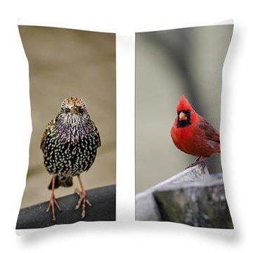 Backyard Bird Set Throw Pillow by Heather Applegate