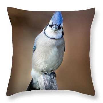 Backyard Birds Blue Jay Throw Pillow by Bill Wakeley