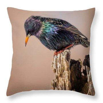 Backyard Birds European Starling Throw Pillow by Bill Wakeley