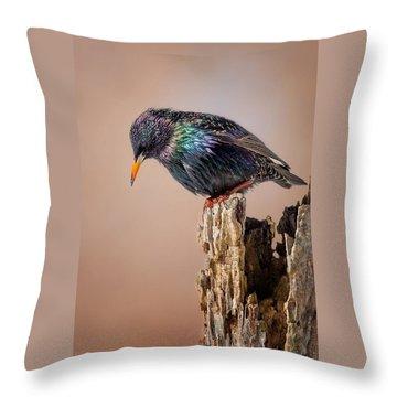 Backyard Birds European Starling Throw Pillow