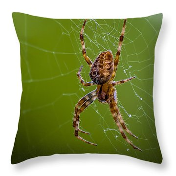 Backyard Spider Throw Pillow by Ken Morris