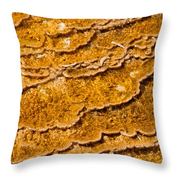Bacterial Mat - 9 Throw Pillow by Dan Hartford