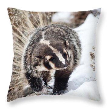 Badger In The Snow Throw Pillow