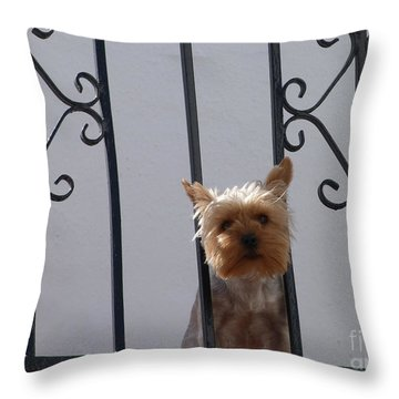 Throw Pillow featuring the photograph Balcony Dog by Phil Banks