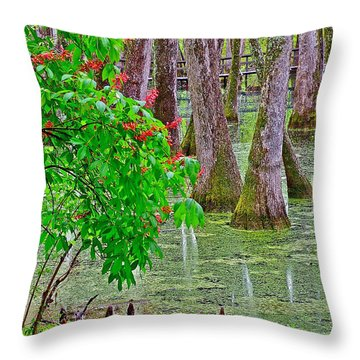 Bald Cypress And Red Buckeye Tree At Mile 122 Of Natchez Trace Parkway-mississippi Throw Pillow by Ruth Hager