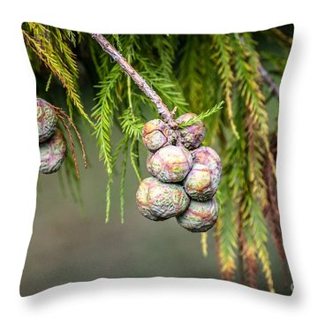 Bald Cypress Tree Seed Pods Throw Pillow