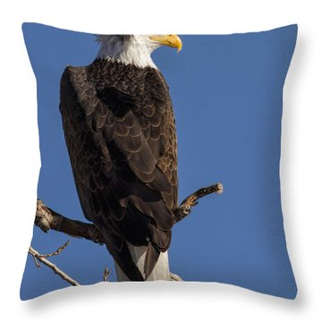 Throw Pillow featuring the photograph Bald Eagle 1 by Rob Graham