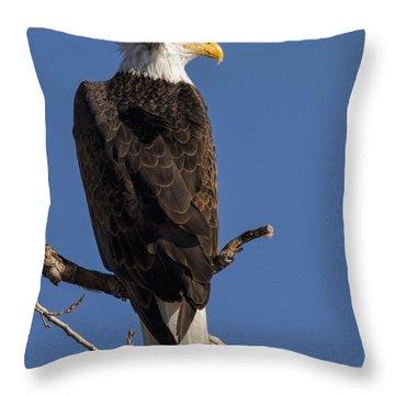 Bald Eagle 1 Throw Pillow